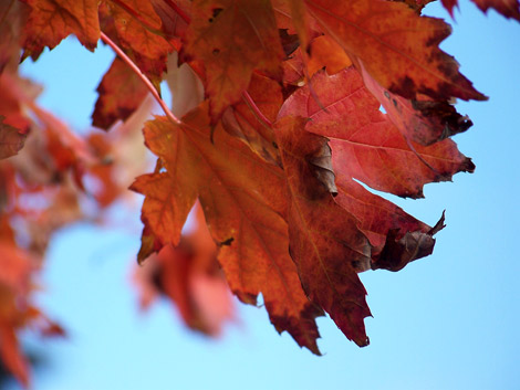 gigi_leonard_photography_leaf_study_4_470